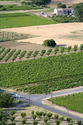 メネルブ周辺の畑