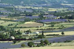 ラヴェンダー畑