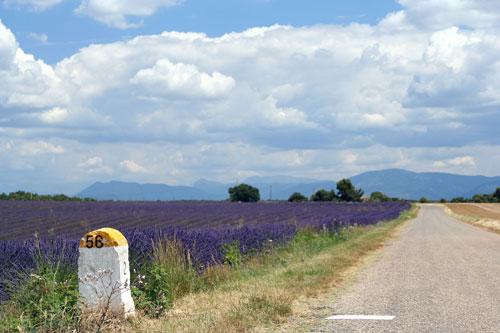 ラベンダー畑と道