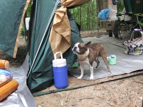 琵琶湖キャンプ (14)