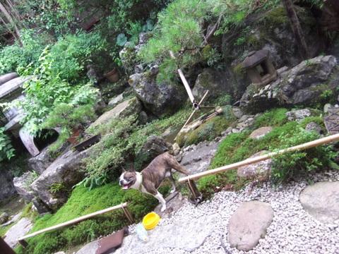 琵琶湖キャンプ (28)