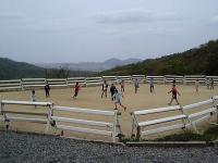 2006-5-6-pony1.jpg