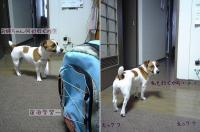 2006-6-15-meria1.jpg