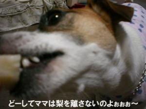 2006-9-10-nasi2.jpg