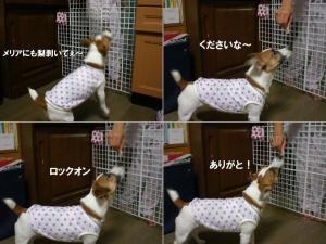 2006-9-10-nasi4.jpg