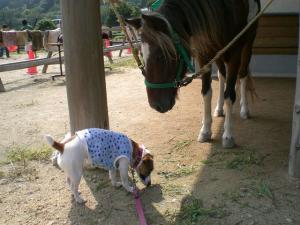 2006-9-30-pony3.jpg