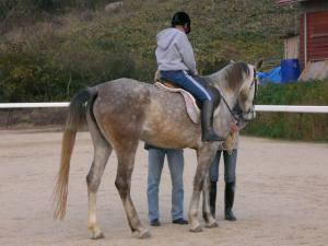 2007-12-2-pony1.jpg