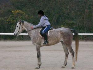 2007-12-2-pony5.jpg