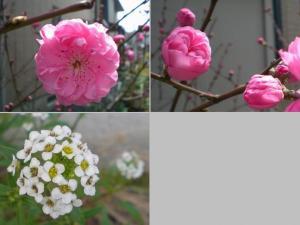 2007-4-7-hana6.jpg