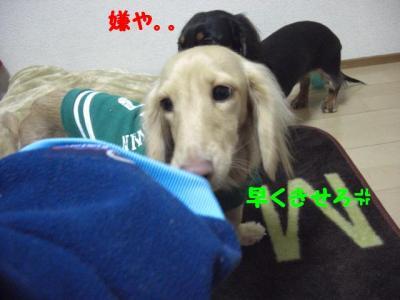 CIMG6838.jpg