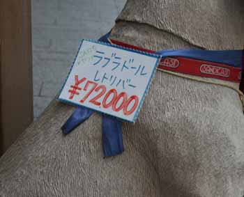 20070806215432.jpg