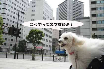 サルサ赤坂おすましのコピー