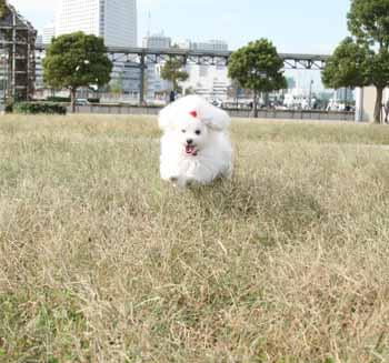 るんば草の上