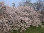 桜05.04.08