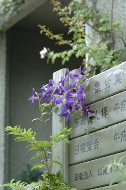blueg915-2.jpg