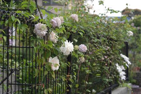 fence504-1.jpg