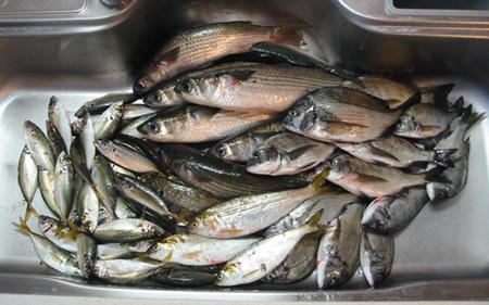 fish911c.jpg