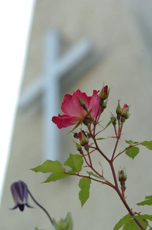 kakuteru513-4.jpg