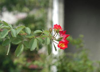 kakuteru821-2.jpg