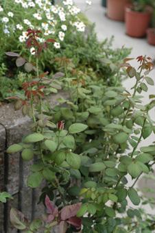 okurahoma920-3.jpg