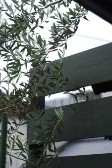 olive2.jpg
