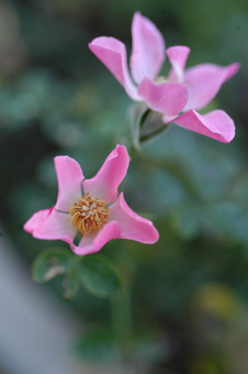 pinkcover1102.jpg