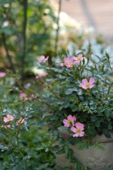 pinkcover522-1a.jpg