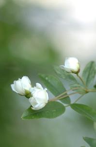 shiromokkou429-1.jpg
