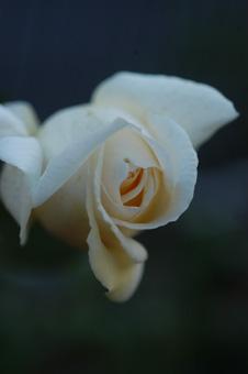 white1102-2.jpg