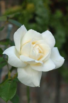 white1115-14.jpg