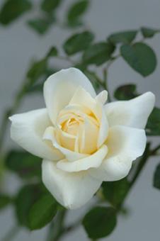 white1115-1b.jpg