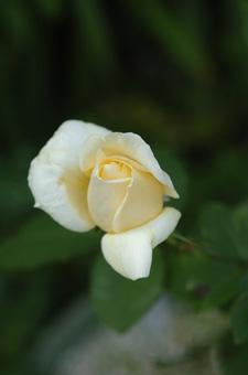 white1115-5.jpg