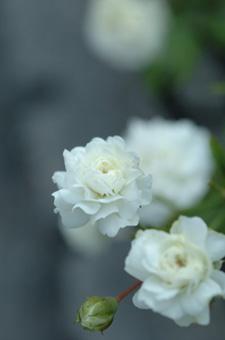 white724-2a.jpg