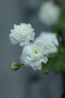 white724-3a.jpg