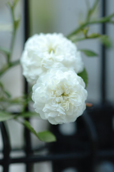 white724-4.jpg