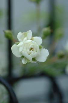 white724-8.jpg