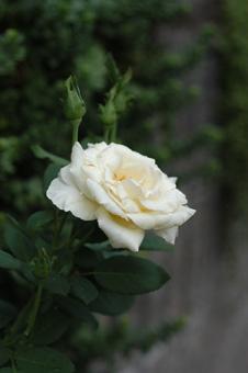 white916-1.jpg