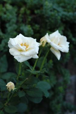white921-2.jpg