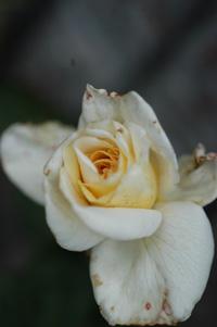 whitec626-3.jpg