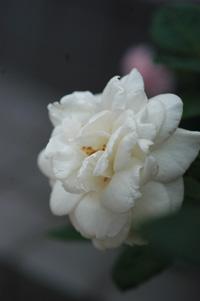 whitec626-4.jpg