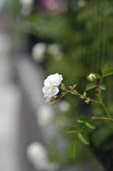 whitedorosy529-4.jpg