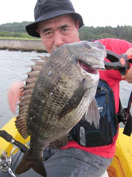 クロダイ釣り2