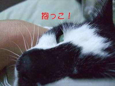 20070704sasuke3.jpg