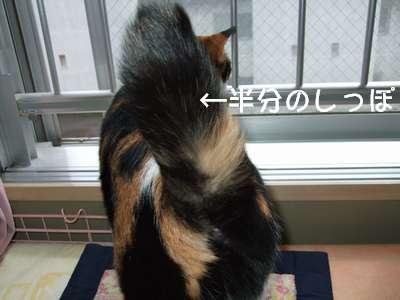 20070707mikan.jpg