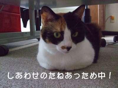 20070707mikan3.jpg