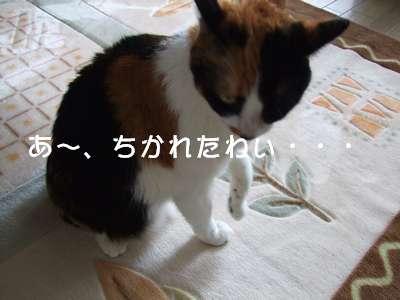 20070820mikan2.jpg