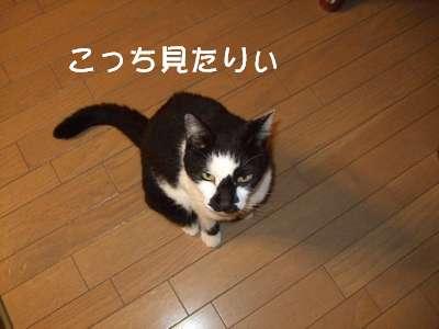 20070827sasuke4.jpg