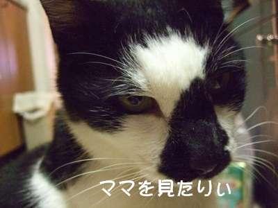20070827sasuke8.jpg