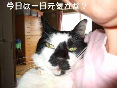 20070905sasuke2.jpg