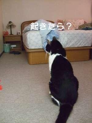 20070911sasuke4.jpg